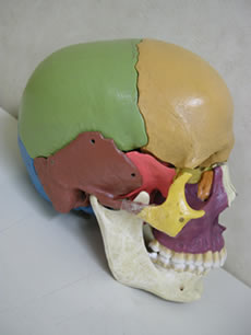 顎が回転して体が捻じれる